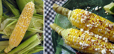 Sweetcorn Seeds - MEXICAN SWEET CORN - Huge  16 Inch Cobs - NON GMO - 50 Seeds