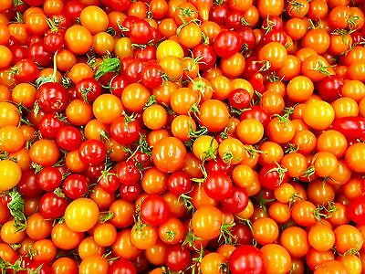 Tomato Seeds - ORANGE ZINGER - Crack Resistant Round - Gmo Free - 10 Seeds