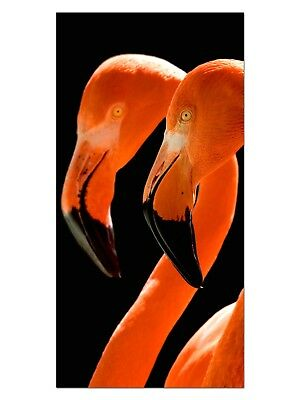 HD GlasBild, Wandbilder XL 50 x 100 cm, EG4100502197 FLAMINGO TIERWELT ORANGE  T