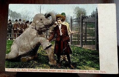 Unusual Vintage Postcard Baby Elephant Trainer Central Park Zoo NY