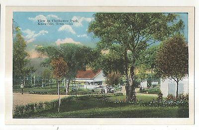 View in Chilhowee Park KNOXVILLE TN Vintage Tennessee Postcard