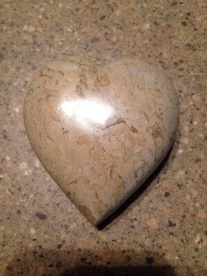 New Fossil Heart Shape Shell 15-40 Million Years Beautiful Stones