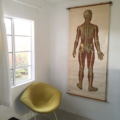 Large vintage mid century anatomy map chart
