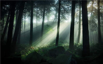 Pinewoods Forest Sun Rays 3D Full Wall Mural Photo Wallpaper Printed Home Decal