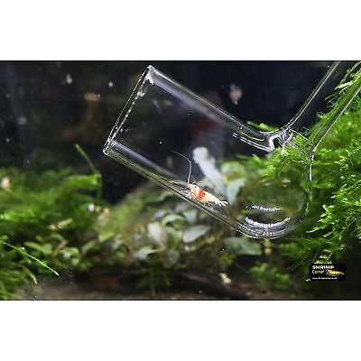 Shrimp Glass Catcher Net - made for cherry crystal taiwan bee shrimps fish fry