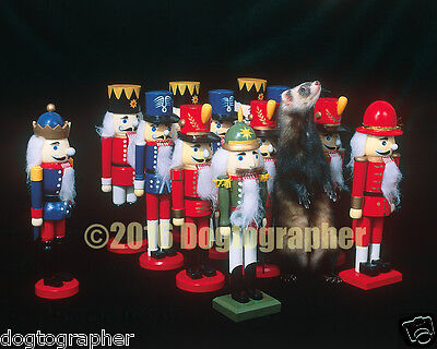 16x20 Ferret Photo - Ferret With Wooden Soldiers - Great Christmas Gift