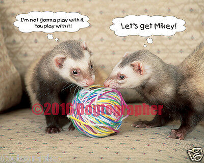 16x20 Ferret Photo -Ferrets with ball of yarn gift - Let's Get Mikey!