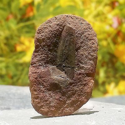 Plant Nodule Fossil, Carboniferous in age, from USA - FSE306