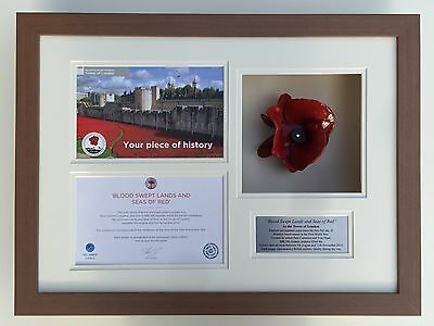 Tower Of London Ceramic Poppy Display Frame/case Medium Oak Finished Frame