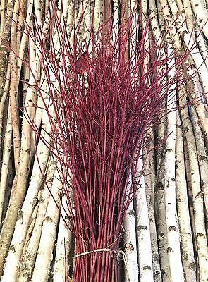 100 Decorative Red Dogwood Branches