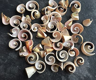 50g Spiral Shell beads (approx 45-50 pcs). Approx 8-20mm. SP12