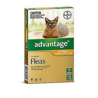 Advantage Orange 6 Pack Small Cats under 4kg for fleas