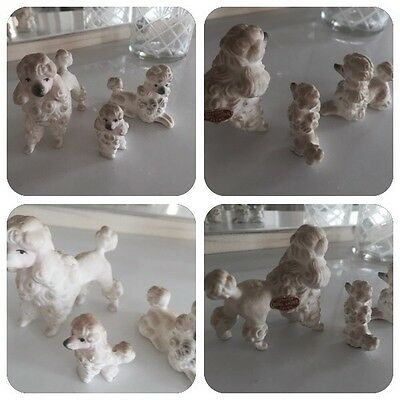 �� Delicate China Ornament ��  •:* Vintage 3 FAMILY Toy Poodles *:• ��