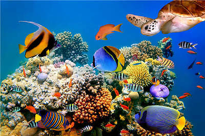 Tropical Fish Turtle Coral Reef Full Wall Mural Photo Wallpaper Print Home 3D De