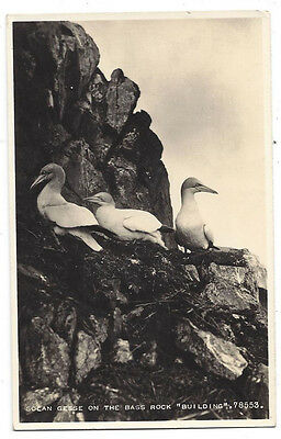 BASS ROCK Solan Geese Building, RP Postcard by Valentine, Unused