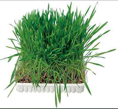 Trixie Bag Of Cat Grass Seeds - Approx. 100 G/Bag (Grow Your Own)4233 no Tray