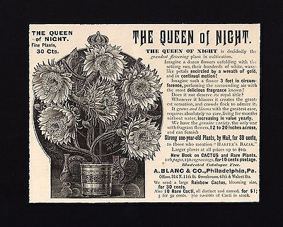 1891 Ad The Queen of Night Gorgeous Flowering Plant Flowers A. Blanc Co. Phila.