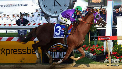 California Chrome  winning race Horse refrigerator magnet  2 1/2 x 3 1/2""
