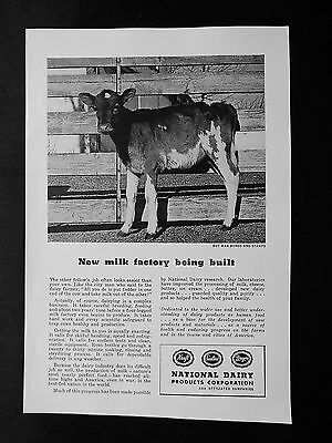 "National Dairy - Cow "" New milk factory being built"" WWII Vintage Ad of 1945"