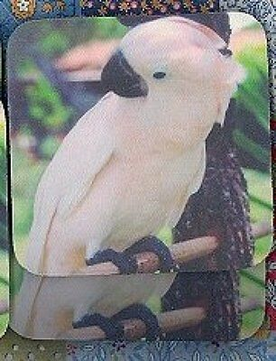 COCKATOO MOLUCCAN Rubber Backed Coasters #0760