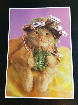 Cat In Curlers #11327 5X7 Postcard