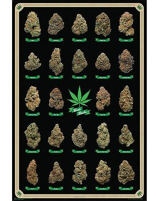 Marijuana Best Buds Grid Poster Art Print 24X36 New Free Shipping