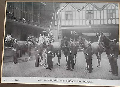 The Birmingham Fire Brigade The Horses Framed Photograph
