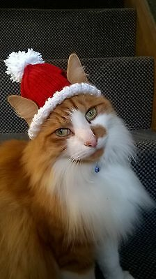 Santa Cat Hat - handmade christmas novelty  cat lovers xmas gift stocking filler