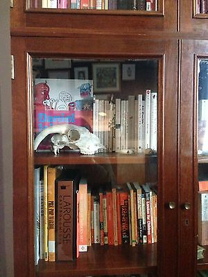 Vintage Antique Natural History Museum Book Case Display Cabinet Of Curiosities