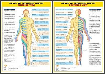 Nervous System Anatomy Medical A2 (17''x24'') Laminated Charts/Posters- Set of 6