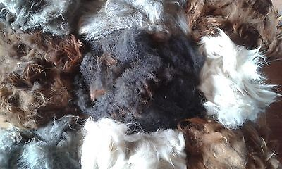Alpaca Fibre, Fleece, natural colours, Raw Fleece, felting, Spinning, Crafts