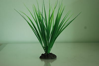Aquarium Variegated Rush Green Plant 13 cms High Suitable For All Aquariums