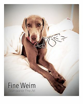 'Some Weim time' Weimaraner Dog, Signed, Limited Edition, Fine Art Print