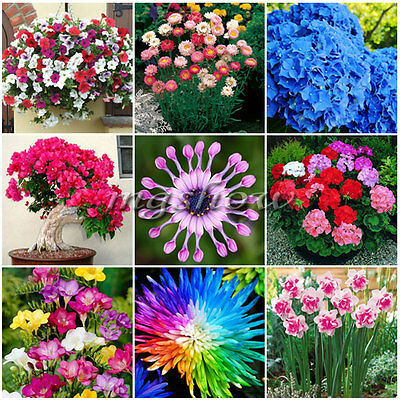 Flower Seeds Home Garden Plants Decor Multi-color Daisy Rare Perennial Orchid