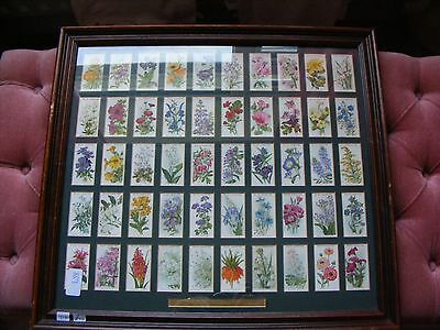 W D & H O Wills Cigarette Cards Old English Garden Flowers Framed With Glass