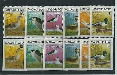 Hungary 1980 Water Birds Imperf And Perf Sets Superb Mnh