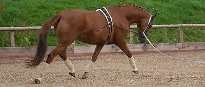 Equiami Lunge System 13hh-17hh