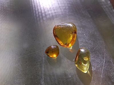 3 Pieces Polished Dominican Amber with Insect Inclusions 25 Million Years Old
