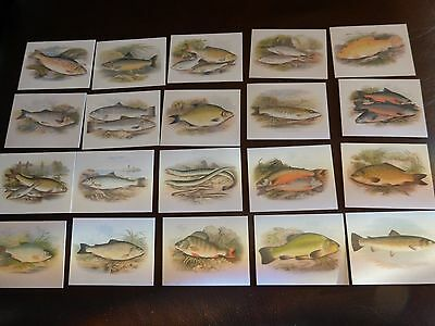 Gd Cards British Freshwater Fish Set Of 20 Cards Excellent Plus Condition
