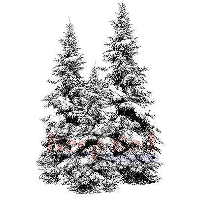 Deep Red Cling Stamp 2 Inch X 3 Inch-Winter Pines 799471515754