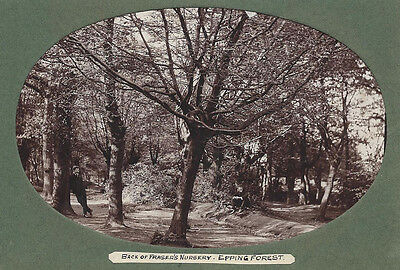 EPPING FOREST The Back of Fraser's Nursery - Antique Photograph c1905