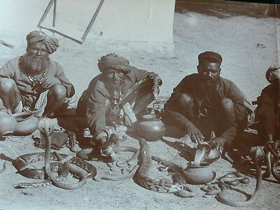 Genuine Vintage Photo India Snake Charmers Cobras Boa Constrictors Weird Real