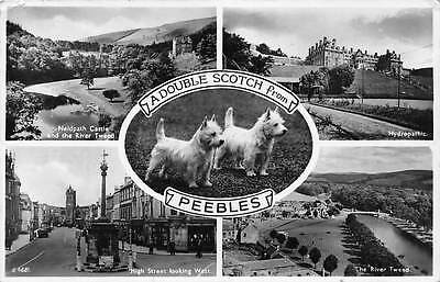 Peebles Neidpath Castle Hydropathic Tweed River Double Scotch Puppy Dogs 1956