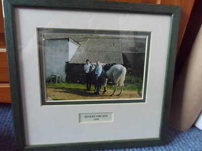 DESERT ORCHID photograph 1998 Extremely RARE unique horse racing photo