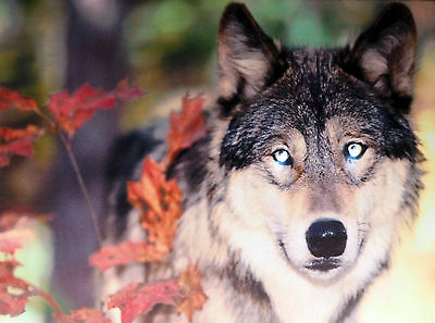 Wolf In Spring Forest LED Light Up Eyes Canvas Wall Picture - Battery Operated