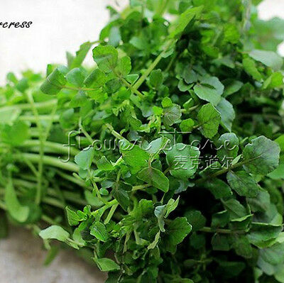 """Garden Vegetable 400 Cress """"Watercress""""  Seeds Resistant to Pest All Natural 3"""