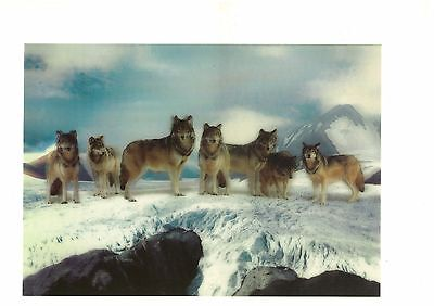 wolf animal photography 3D Lenticular Holographic Stereoscopic Picture Wall Art