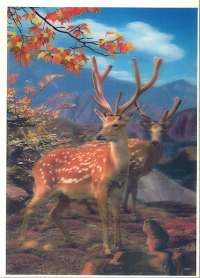deer sika deer 3D Lenticular raster Holographic Stereoscopic Picture Wall Art