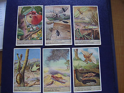 Liebig Original Cards Chromos S 1458 Insectes Orthoptères  Complet