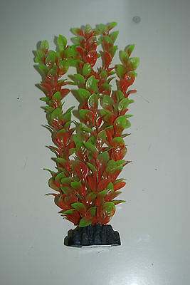 Aquarium Plant Ludwigia Plant Red & Green 20 cms High Suitable For All Aquariums